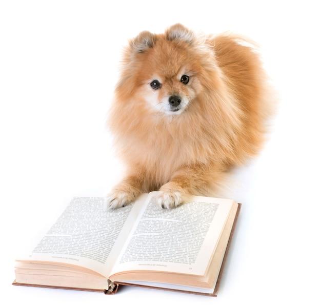 Pomeranian spitz and books