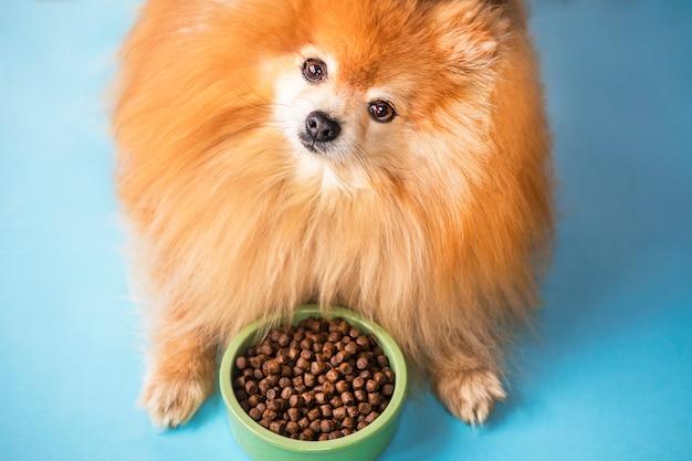 포메라니안 스피츠가 먹고있다. 강아지 발, 솜 털 다리와 파스텔 블루 빛 배경에 세라믹 녹색 그릇에 애완 동물 건조 식품. 개 또는 강아지 음식. 건강한 애완 동물 영양. 식사, 개 저녁.