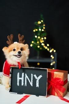 크리스마스 트리와 선물 상자 근처에 사슴 뿔 모자 테두리가있는 포메라니안.