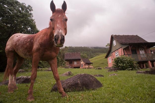 Померод, санта-катарина, бразилия - 26 ноября 2015: низкий угол зрения мула в мундо антиго (старый свет)