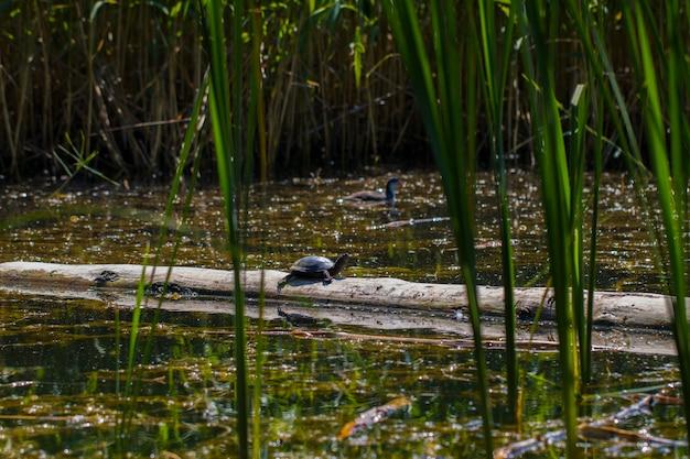 여름날 연못과 물 식물.