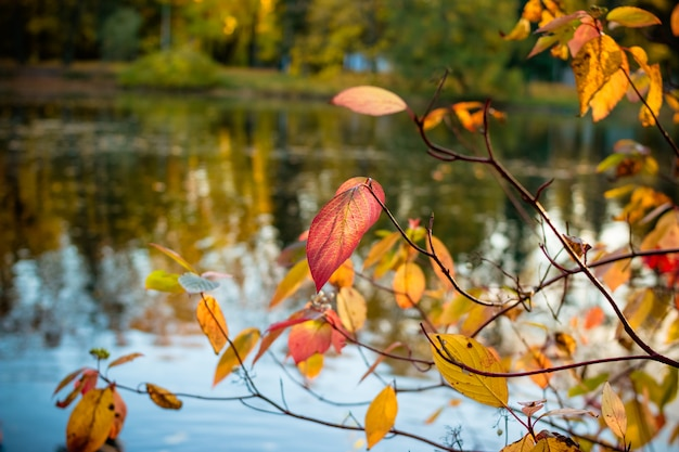 Pond in autumn, yellow leaves, reflection.