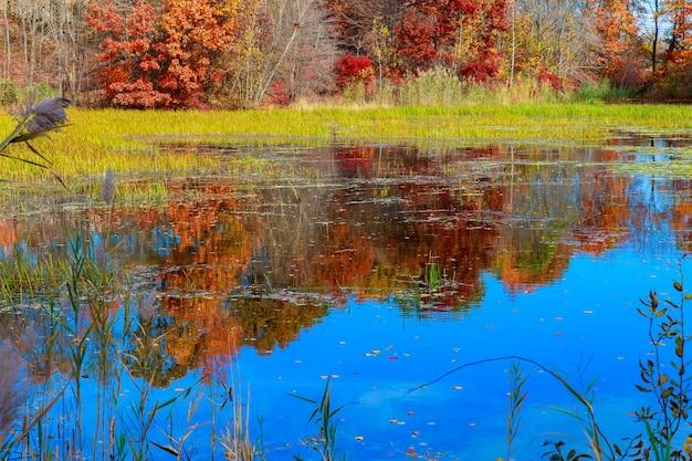 Пруд осенью, желтые листья, отражение осеннее желтое лесное озеро