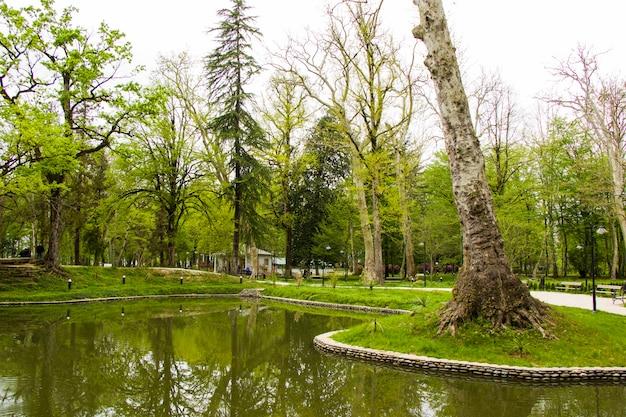 公園の池、ジョージア州のズグディディ植物園。春。