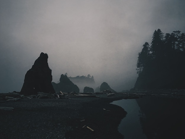 Pond near a forest and sticks on a ground and a silhouette of rocks with fog surrounding them