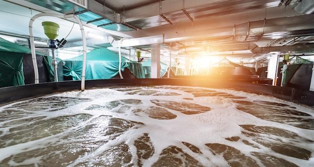 Pond shrimp. new business. seafood concept. factory inside