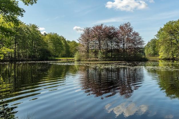 昼間の青空の下で緑の木々に囲まれた池