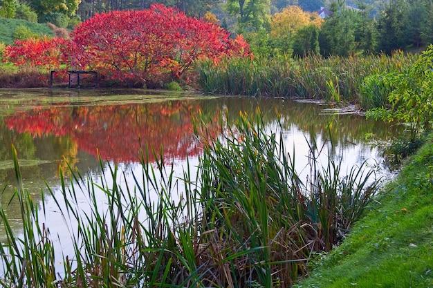 Поверхность воды пруда с отражением красочного красного куста в осеннем парке