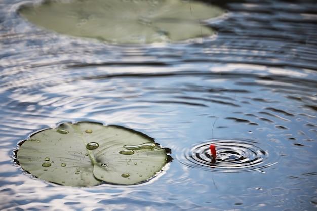 오리풀, 습지 식물, 수련, 빅토리아 아마조니카 백합이 있는 연못
