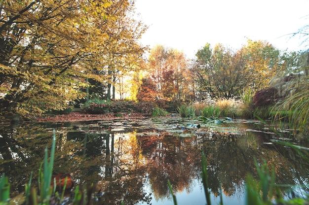 가을 낙엽이 있는 연못