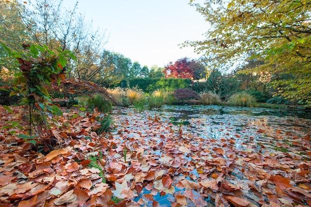 식물의 낙엽이 많은 연못