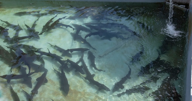 フランスの農場でチョウザメと池 Premium写真