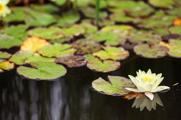 スイレンのいる池。アジアンテイスト。