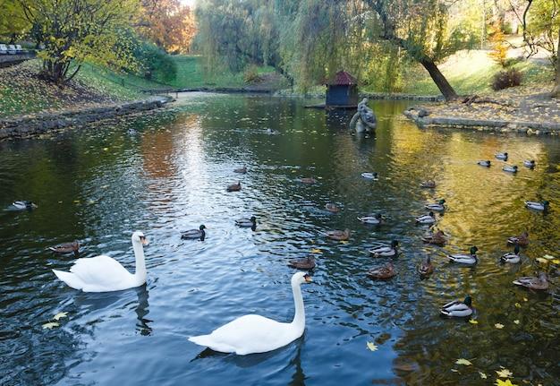 リヴィウ (ウクライナ) の都市の秋の公園で野生のアヒルと白鳥のいる池。