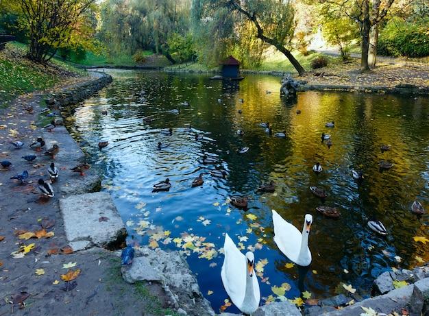 リヴィウ(ウクライナ)の都市の秋の公園にある野生のアヒルと白鳥のいる池。