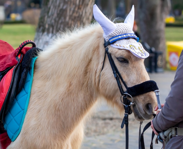 ポニー。遊園地の美しい小さな馬。