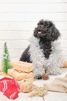 Щенок пуделя и новогодние подарки и украшения