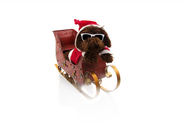 Poodle puppy inside a sleigh wearing a santa claus costume.