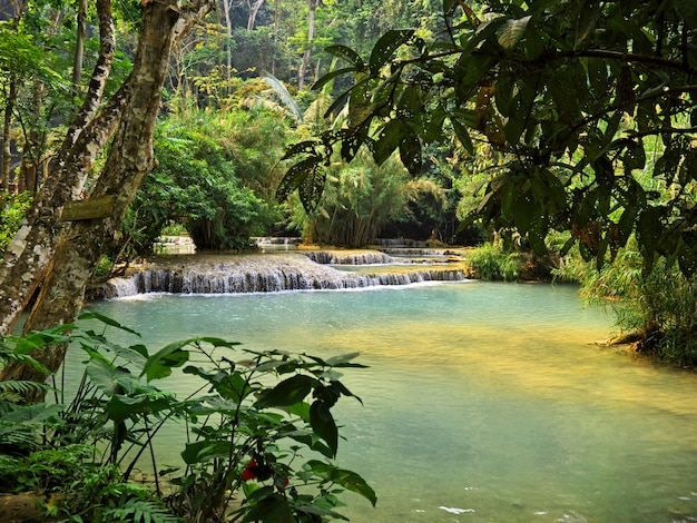 The pool in the jungle, laos