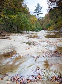 緑の野生の自然と夏の日の森に囲まれた地面に水のプール