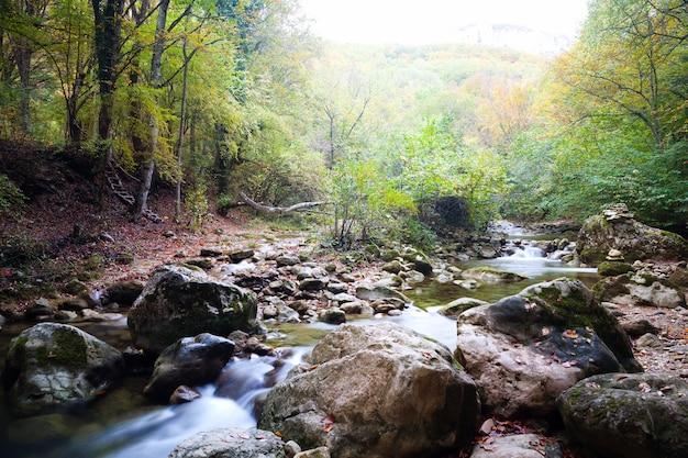 여름 날에는 녹색 야생의 자연과 숲으로 둘러싸인 땅에 물이있는 수영장