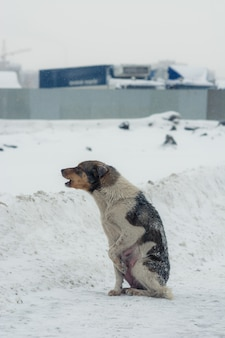 Poor abandoned dog in desperation in winter.