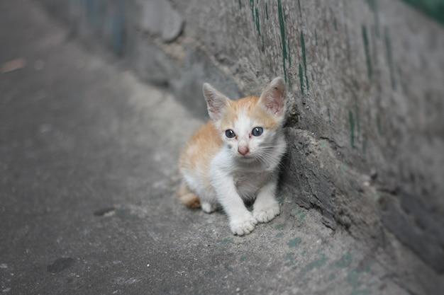 運河の近くの汚れた壁の横に立っているお母さんのいない貧しい一人の白オレンジ色の子猫。