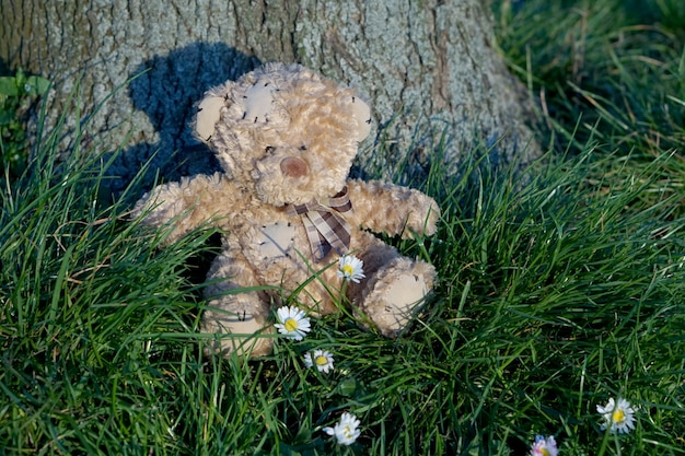 Poor teddy dear sitting on the grass lean against big tree with small beautiful white flowers in front