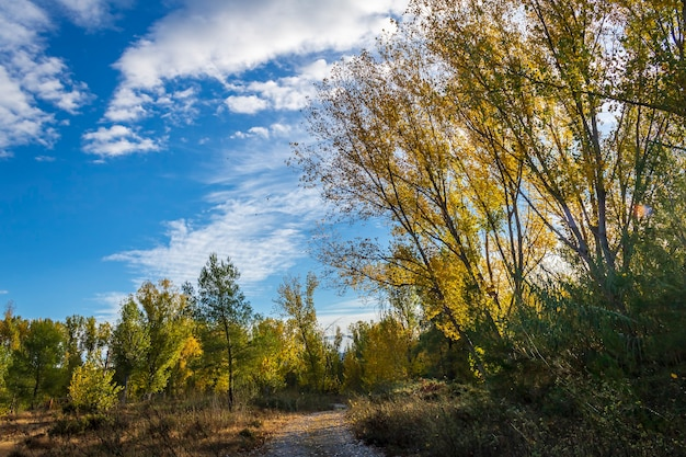 알리 칸 테, 스페인에서 가을에 노란 단풍과 포플러 숲.