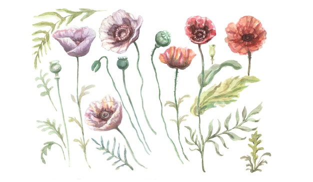 ポピーの花赤紫野花手描き水彩イラスト。スケッチプリントテキスタイル背景パターンシームレスセットフレームボーダー。自然植物は装飾を残します