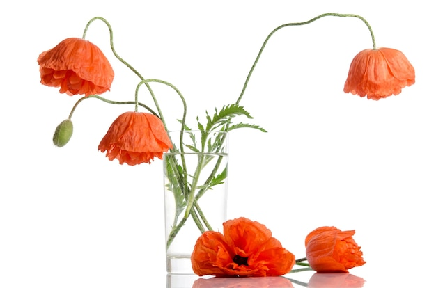 Poppies in glass vase isolated on white