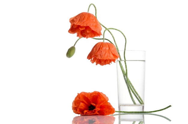 Poppies in glass vase on white surface