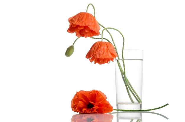 Poppies in glass vase