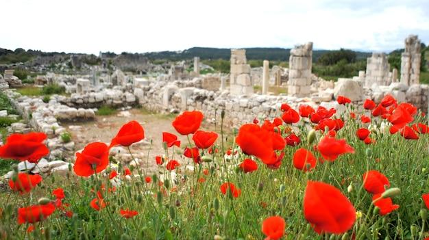 トルコの古代の建物の近くのポピー