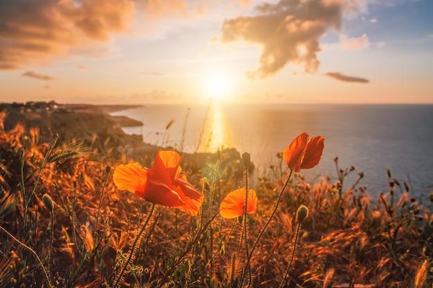 일몰 하늘과 화산암 해안선 잔잔한 바다가 있는 봄 바다 풍경 위의 양귀비