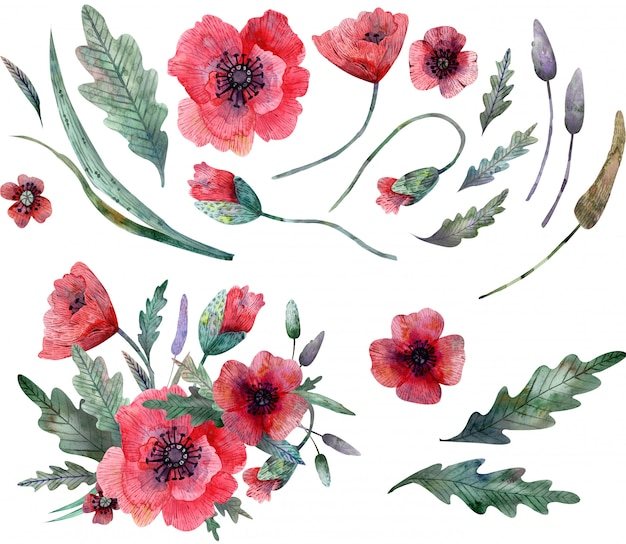 Poppy clipart isolated on white