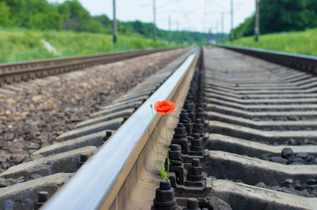 Цветок мака растет на железной дороге