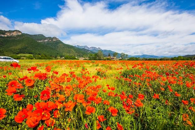Цветы мака и весна в hostalets d en bas