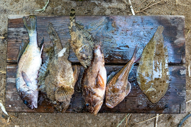 Популярная закуска - вяленая соленая рыба, продаваемая на рынке алушты, крыма, россии. уличная забегаловка.
