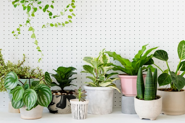 Популярные комнатные растения в горшках на белом фоне