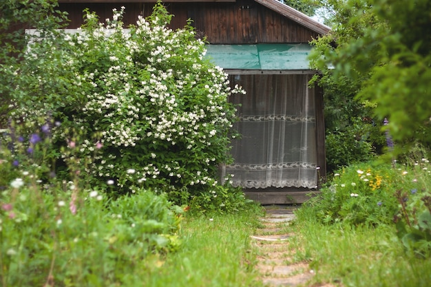 The porch of a wooden village house is covered with a lace curtain next to a large jasmine bush a grassy path leads to the porch on the left flowers.