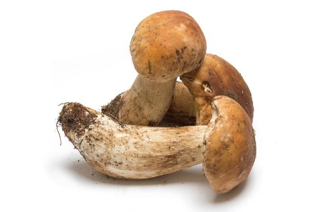 Porcini mushroom on a white