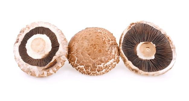 Portabello mushroom isolated