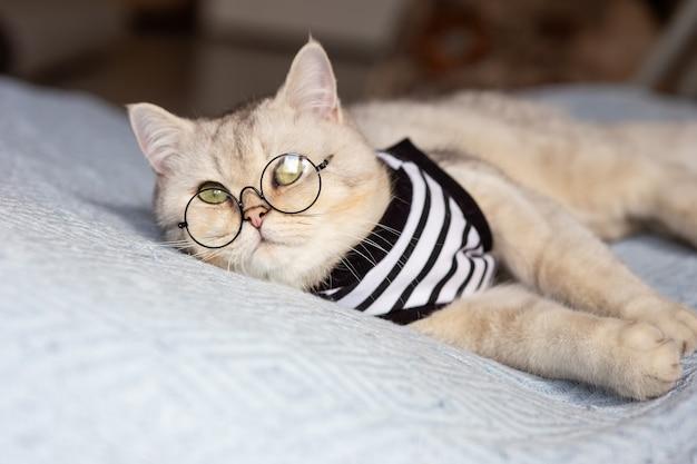 Портрет белого кота в очках на одеяле