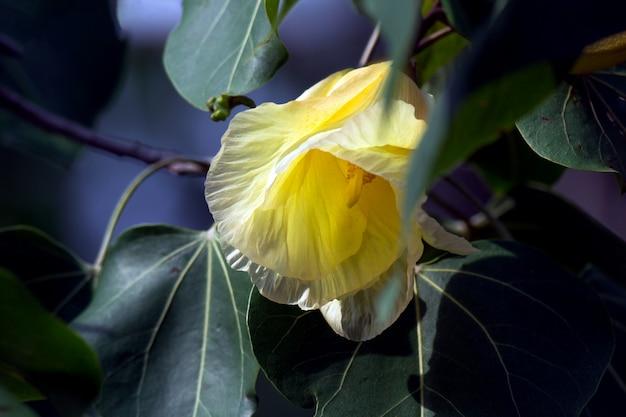 黄色の花の花とポーシャツリー