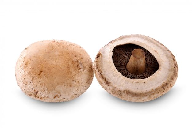Portobello mushroom isolated on the white background.