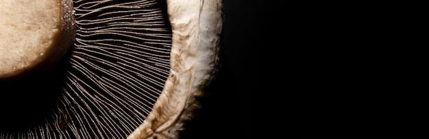 黒の背景にポルトベロマッシュルーム、パノラマのモックアップ画像