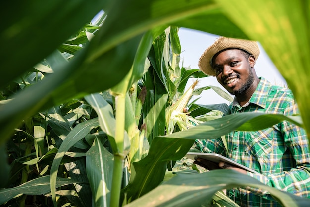 Portrait of africa american farmer standing with tablet in corn field examining crop at blue sky