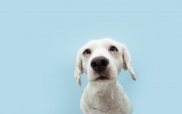 色の目で見上げる肖像画の気配りのある子犬犬。孤立した