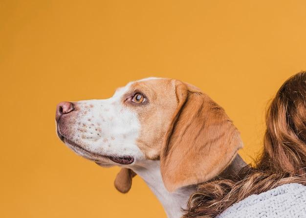 Ritratto di bello cane che osserva via